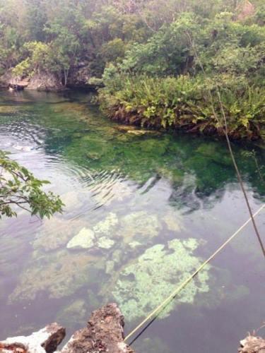 Jardin del Eden Cenote