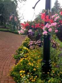 pretty flowers along the walkway