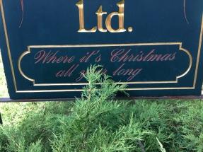 the Christmas shop... love