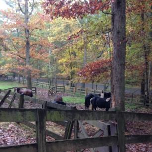 Lost River horses